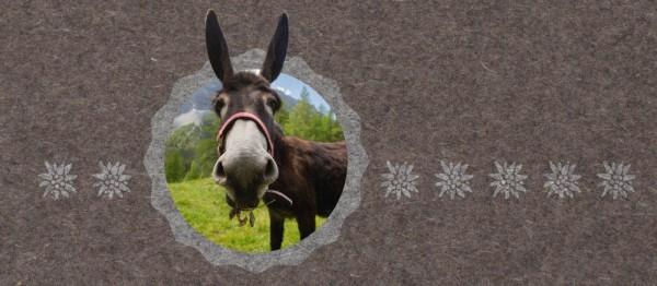 910962 - Windlicht Urchig - Esel