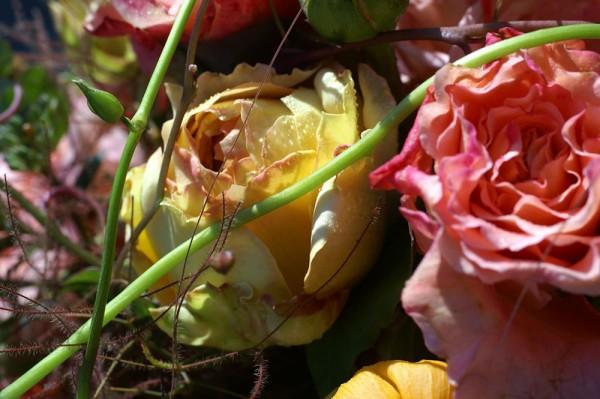 912109 - Macrocard rose