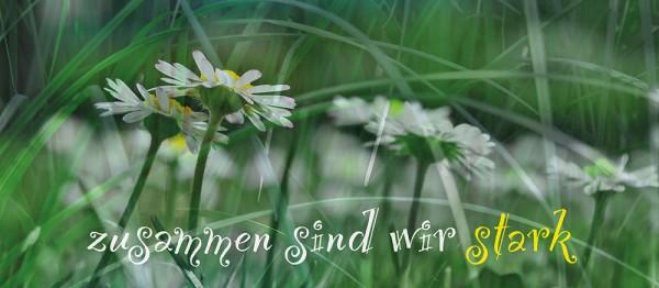 910614 - Windlichtkarte: Zusammen sind wir stark (Gänseblümchen)