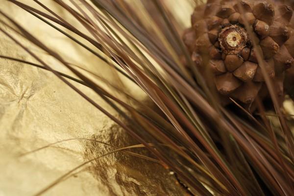 912181 - Macrocard goldener zapfen
