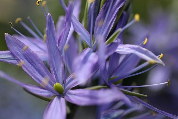 912190 - Macrocard blaublumig