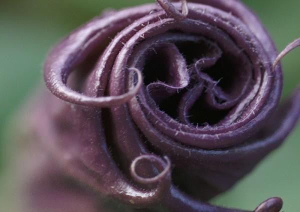 912024 - Macrocard gerolltes lila