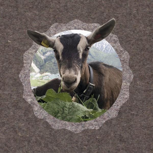 910544 - FotoAusSchnitt - Urchig Ziege