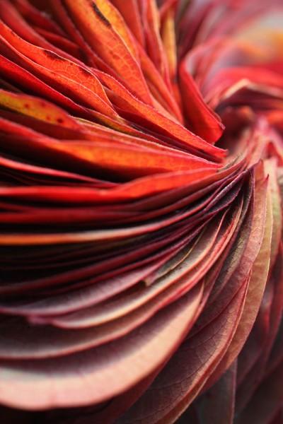 912204 - Macrocard rote heidelbeere