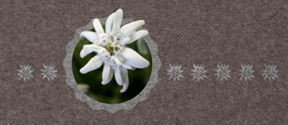 Windlicht Urchig Edelweiss Windlichter Dekoration Papeterie