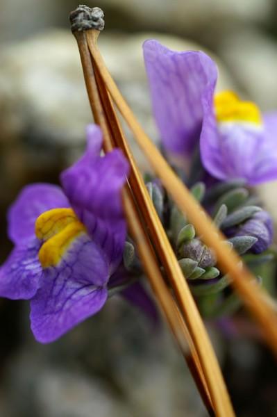 912056 - Macrocard violet