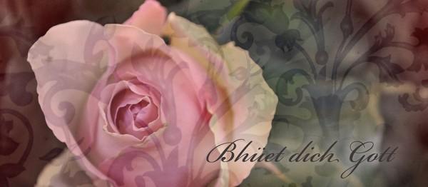 910644 - Windlichtkarte: Bhüet dich Gott! (Rose rosa)