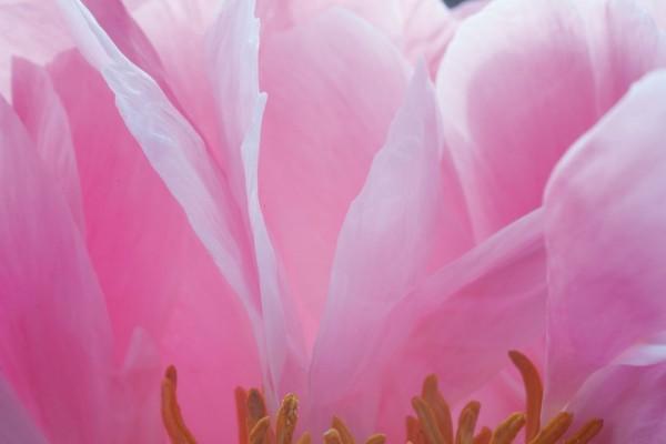 912170 - Macrocard pink