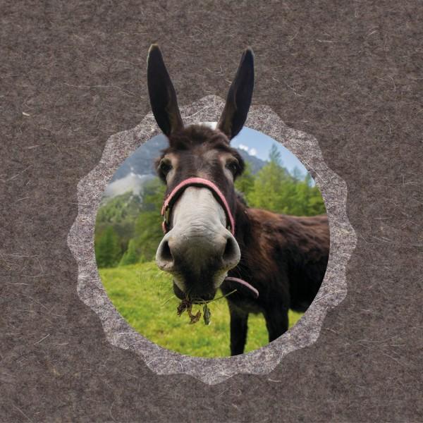 910542 - FotoAusSchnitt - Urchig Esel