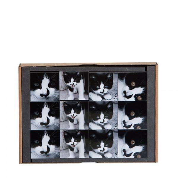 910447 - FotoAusSchnitt - Set7 Katzen