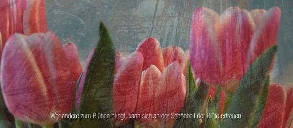 910740 - Windlicht (3 Stk.): Wer andere zum Blühen bringt..(Tulpen)