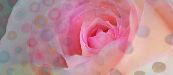 910841 - Windlichtkarte: Rosenblüte (rosa, ohne Text)