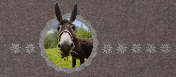 910862 - Windlichtkarte Urchig - Esel