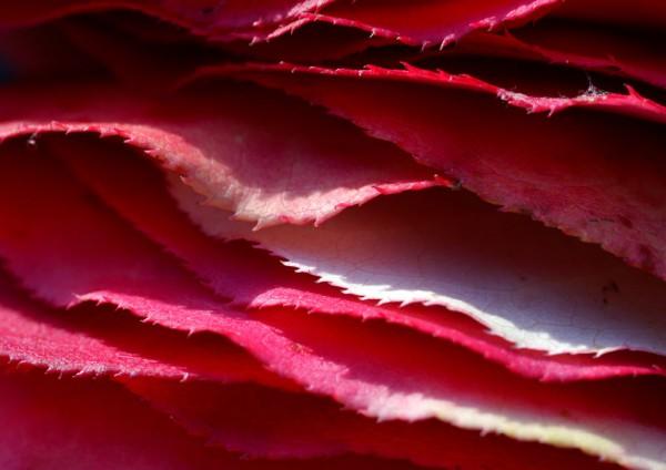 912030 - Macrocard geschichtetes rot