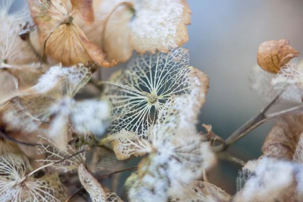 912212 - Macrocard winterschönheit