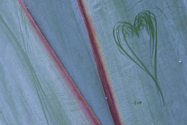 912102 - Macrocard i love you